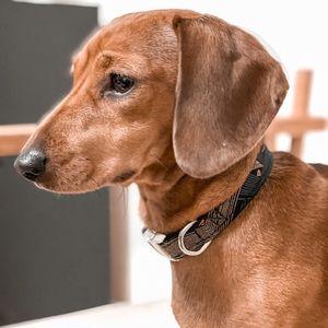 Handmade Dog Collar Accessory